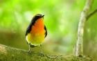我是一只好奇的小鸟