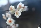 梅花未谢桃花开·冬去春来又一年
