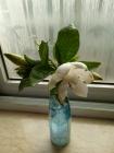 一把花香~~