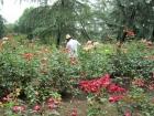 杭州花圃花盛开