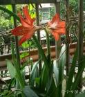 反季节的花开