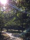 里西湖美景