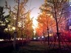 晚间雨色银杏林