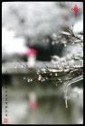 [冬韵]四条幅