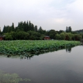 西湖六月景