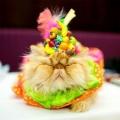 纽约时尚猫咪T台秀