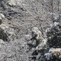 梅灵路雪景续