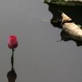 3月柳与花
